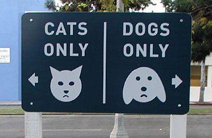 никаких кошек, никаких собак