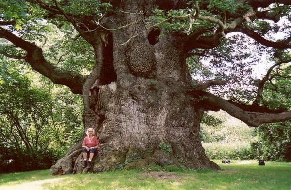 Природы самые большие деревья фото 0