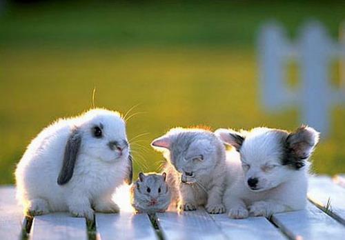 Посмотреть фото с животными и детьми