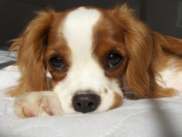 картинки с собаками прости меня пожалуйста ароматные