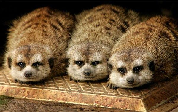 Животных забавные животные фото 11