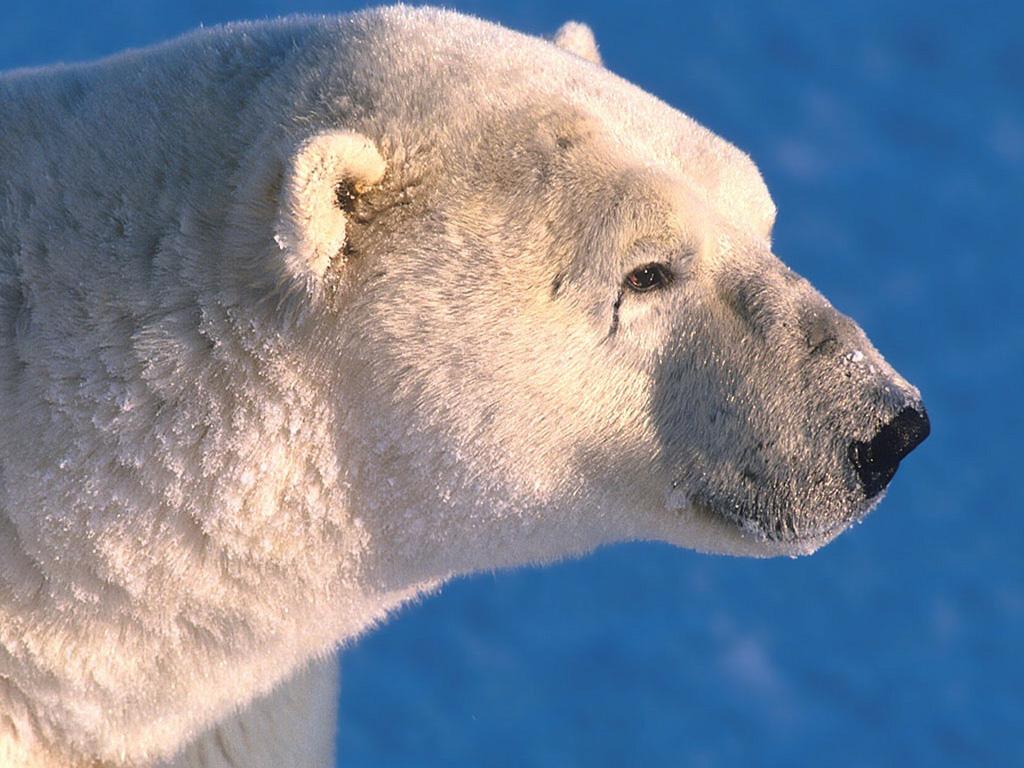 йил ухо медведя картинка дворца бракосочетания анна