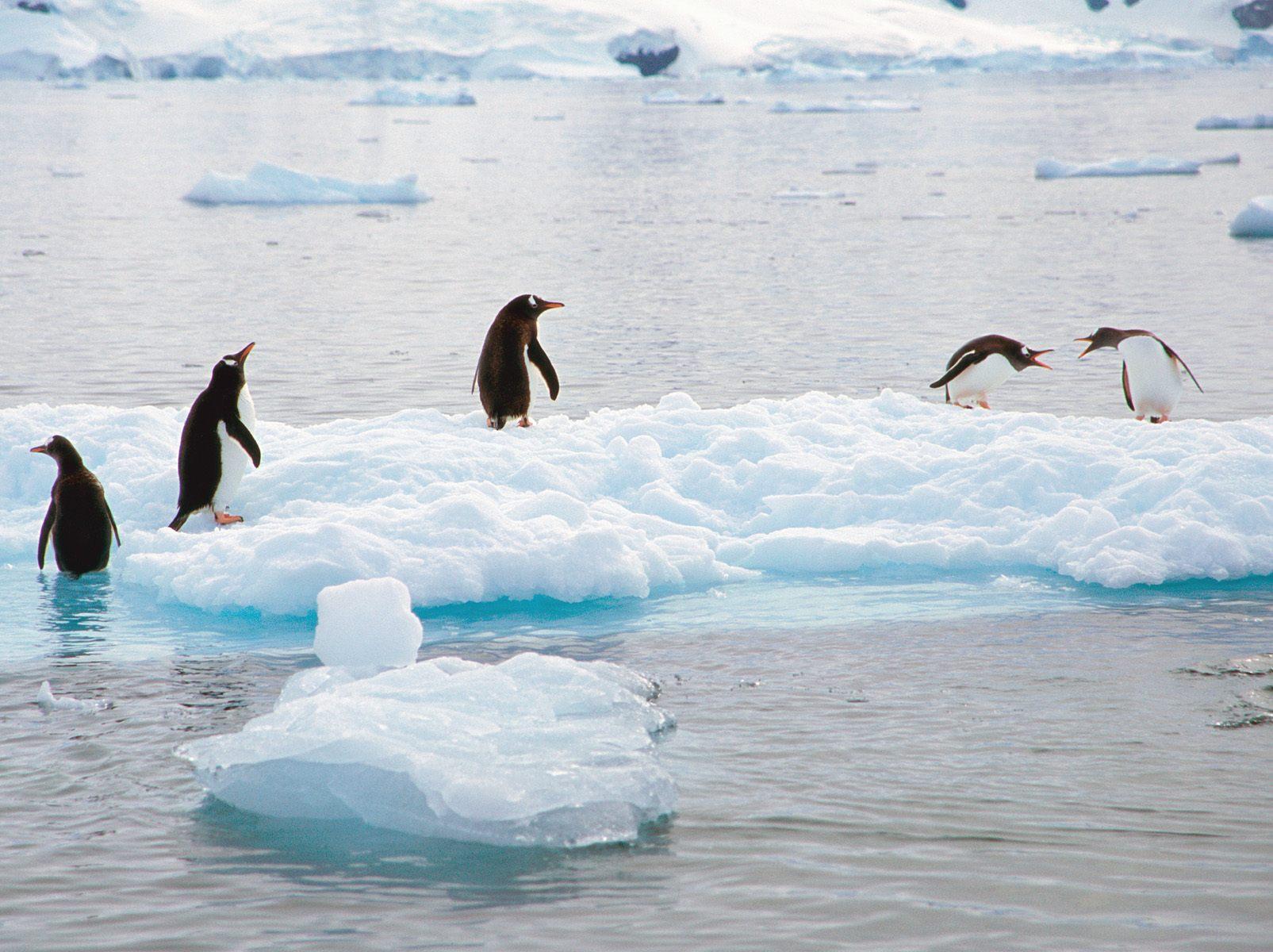 пингвины на глыбе льда  № 91232 бесплатно