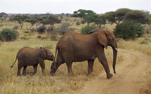 Животные африки фото 9