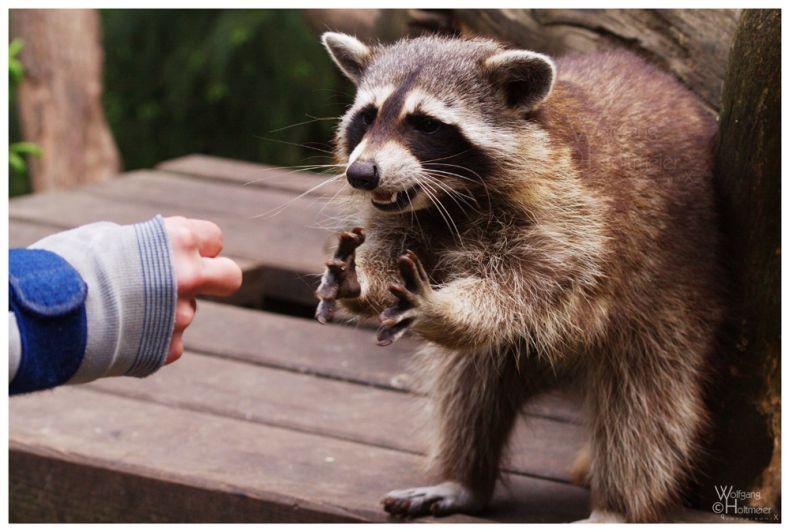 Забавные животные :: фотография 1