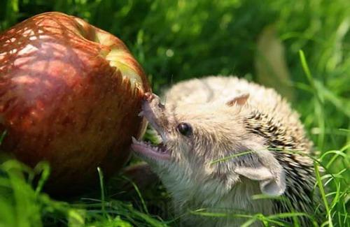 Животный мир смешные фото животных