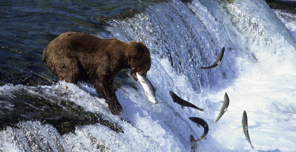 дикая природа смотреть фото #10
