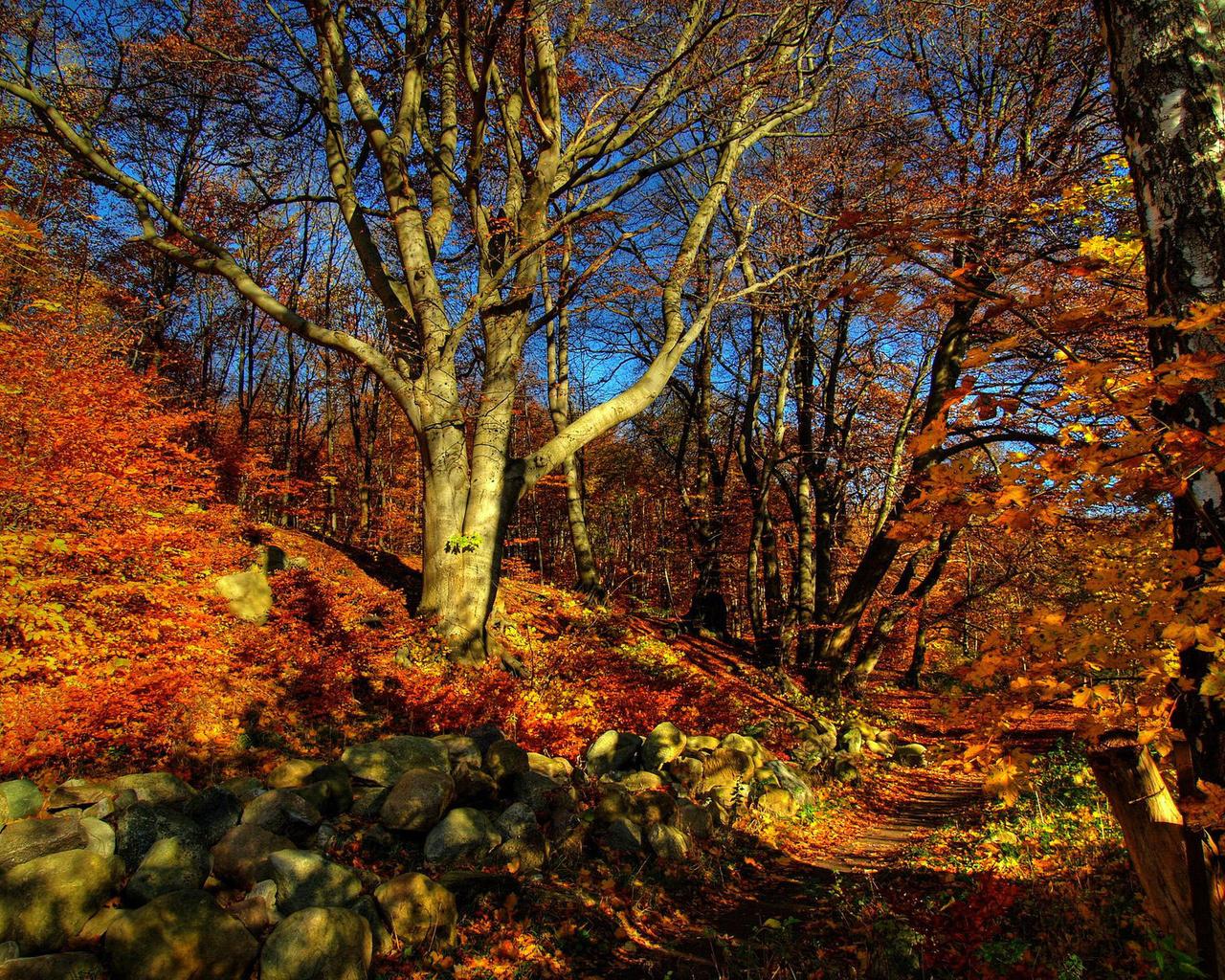 basik.ru - Природа - Осень