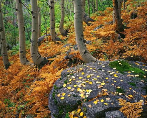 Природа :: Осень фото 7