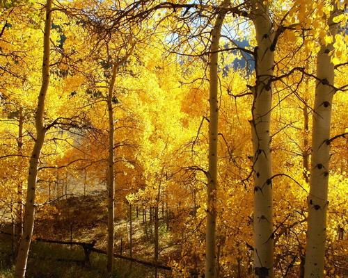 Природа :: Осень фото 9