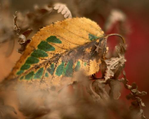 Природа :: Осень фото 22