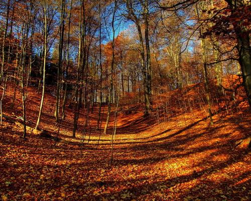 Природа :: Осень фото 30