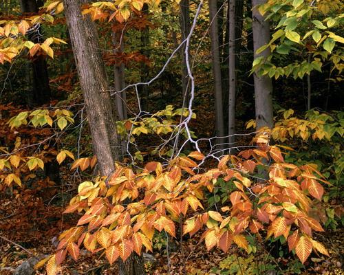 Природа :: Осень фото 31