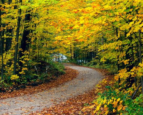 Природа :: Осень фото 35