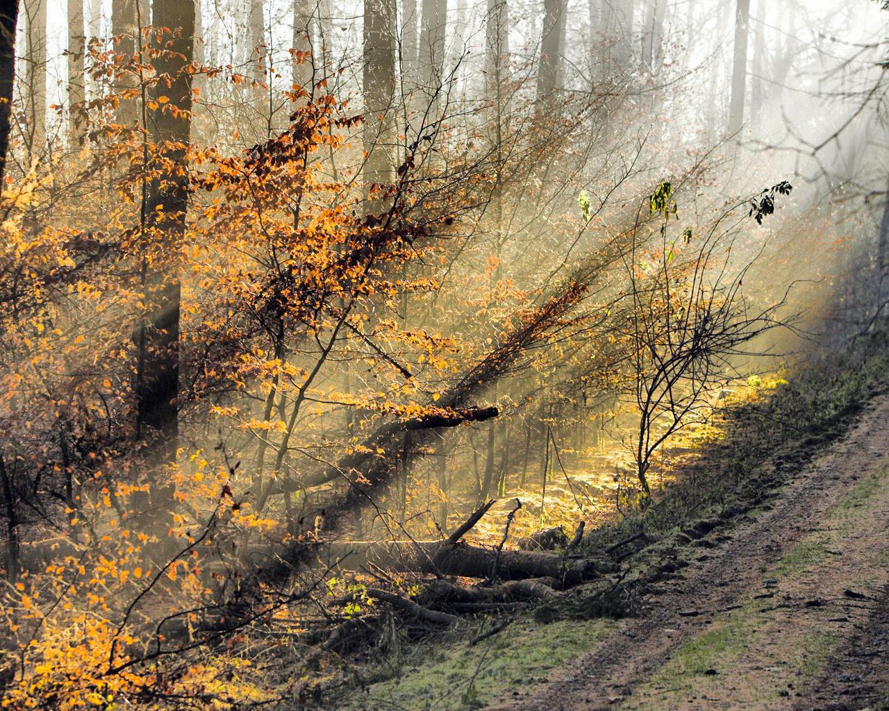 basik.ru - Природа - Осень - фотография 1: basik.ru/photo_nature/autumn_foto/36_autumn_foto