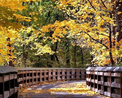Природа :: Осень фото 42