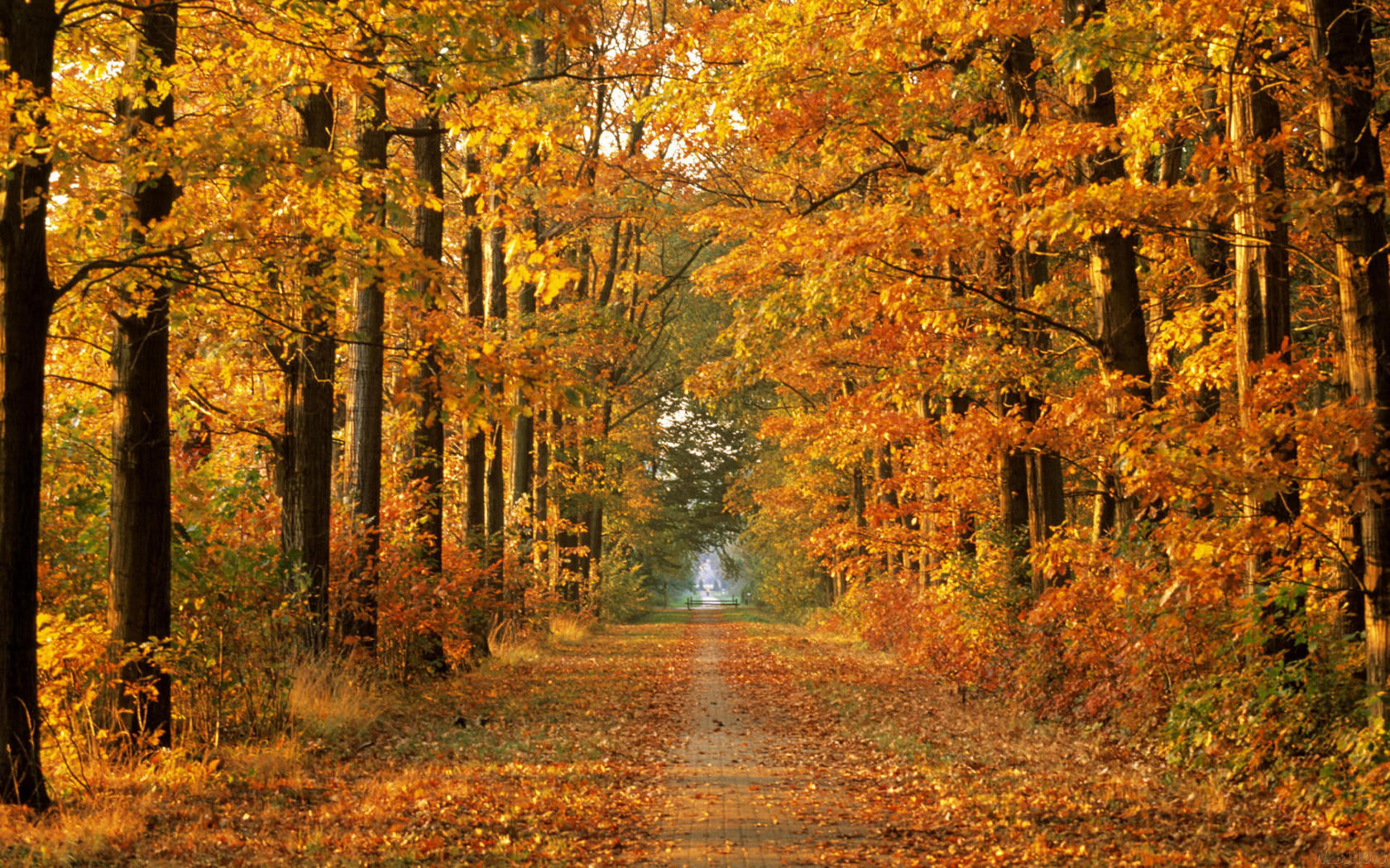 заставка осень на рабочий стол фото