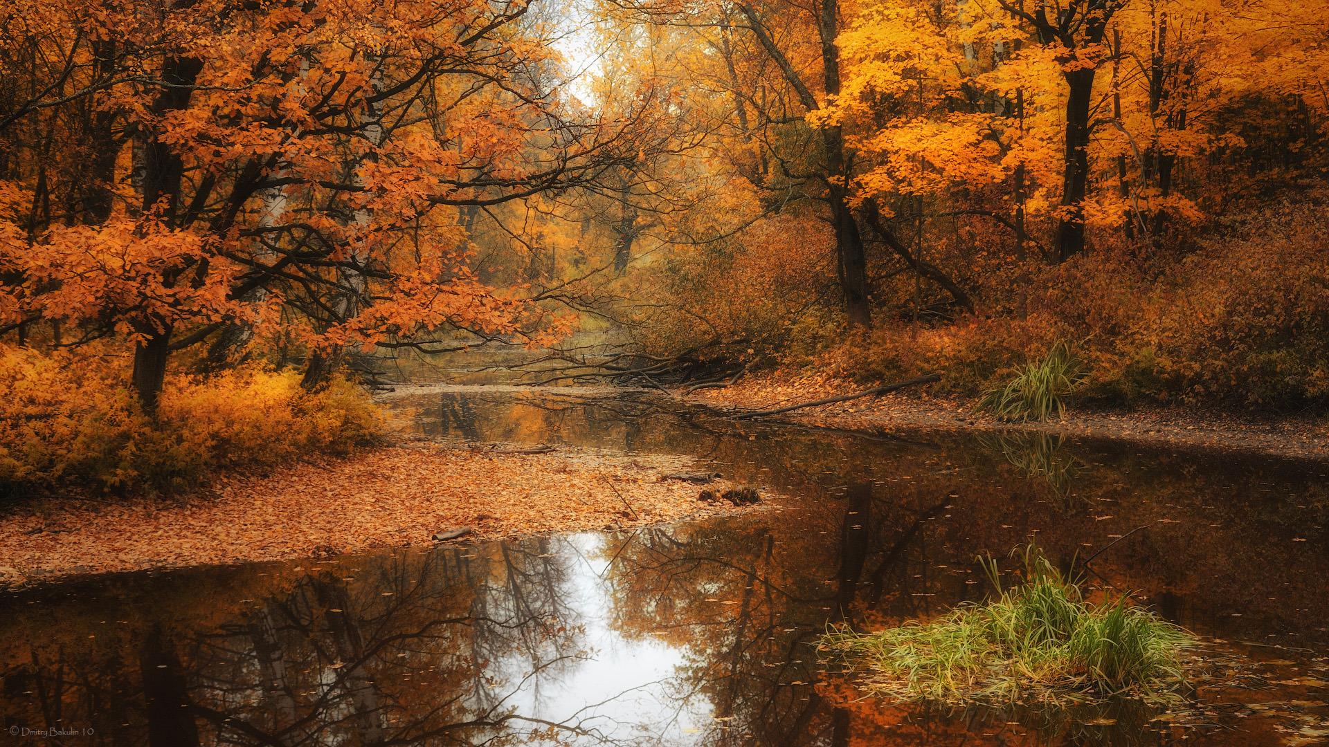 река осень деревья  № 3186404 загрузить