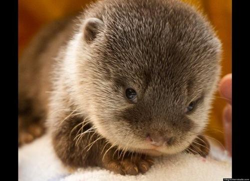 http://basik.ru/images/baby_otters/04.jpg