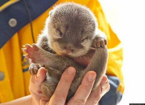 http://basik.ru/images/baby_otters/06.jpg