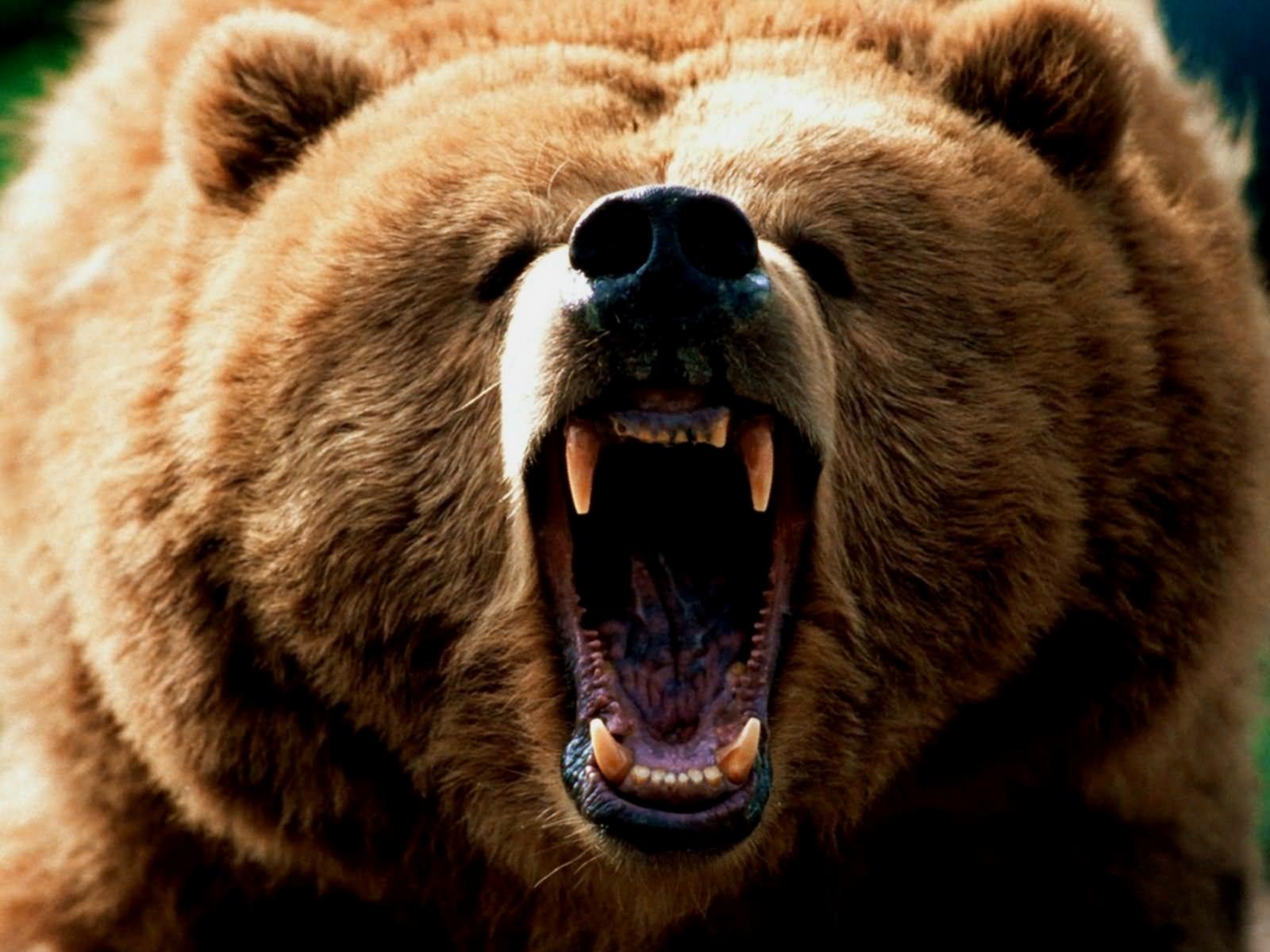 Крутые картинки медведя, открытку днем россии