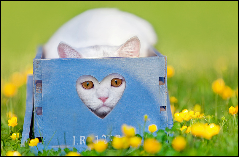 фото мордашек котят