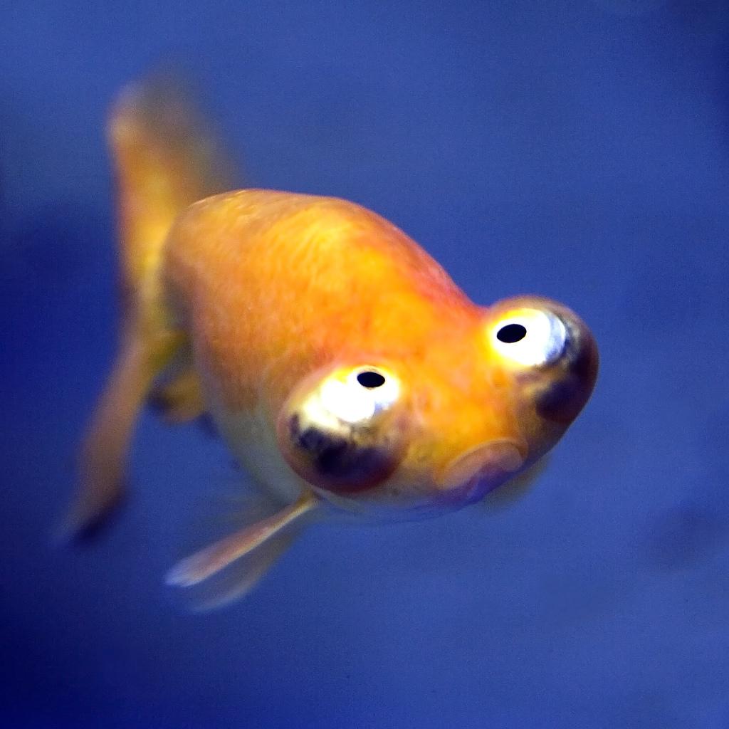 Картинки рыбки приколы, картинки про