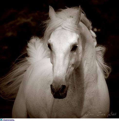 Животный мир, Лошадки, beauty horses foto, лошадь, Животные ...