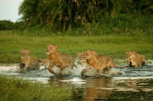 Joubert и его фотографии дикой природы и