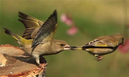 Животный мир птицы фото 0