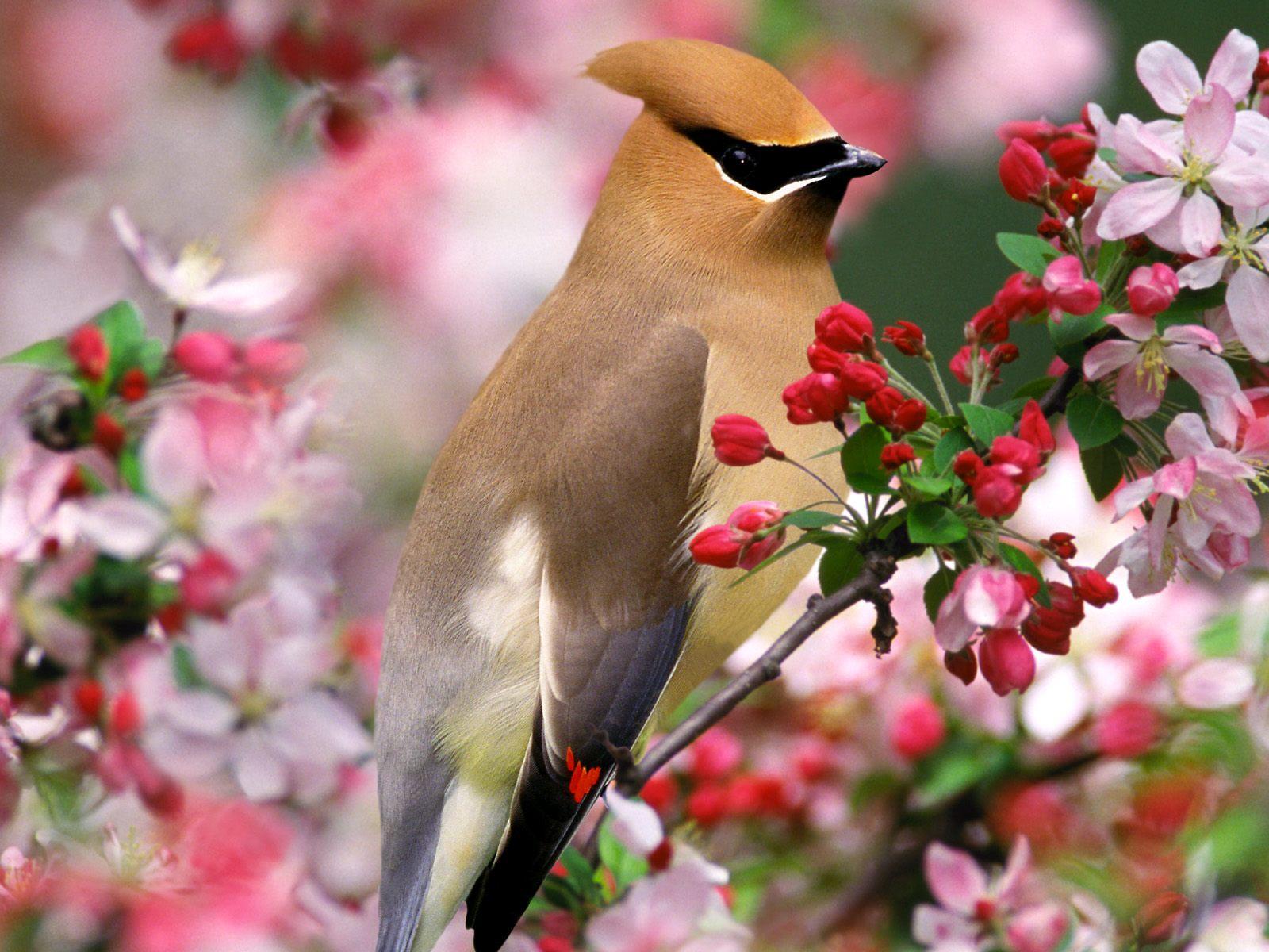 Картинки природа животные птицы, грей меня приколы