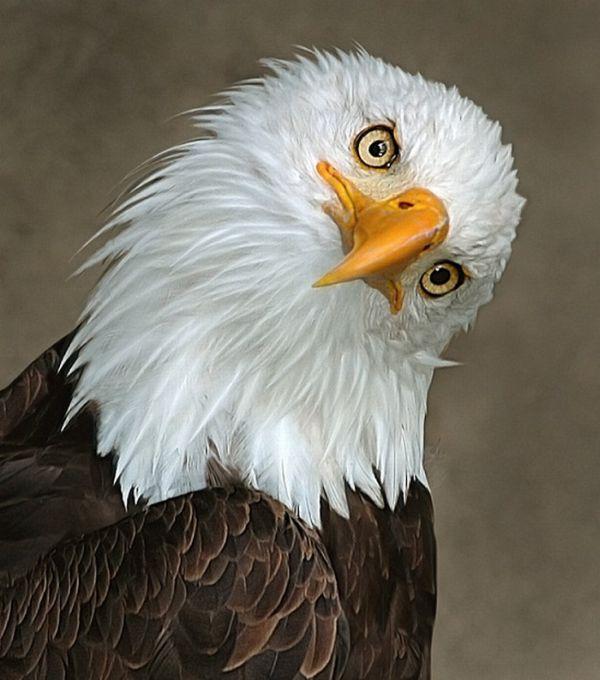Птица с ресницами фото д?мді, ?рі