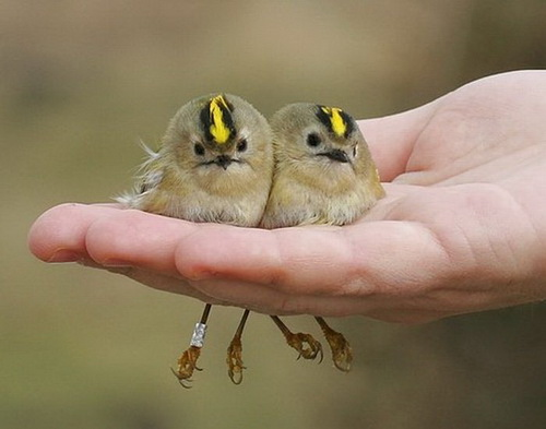 Птицы фото 0
