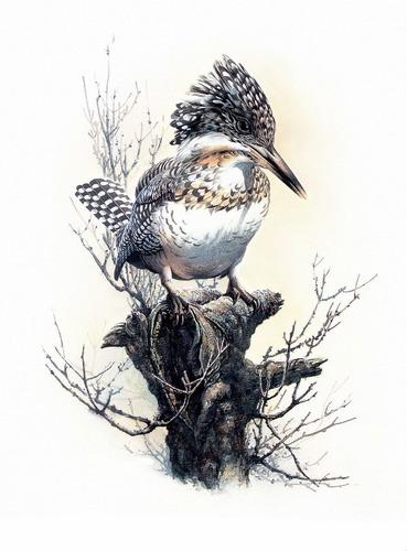 Красивые рисунки птиц фото 1