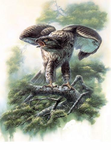 Красивые рисунки птиц фото 2