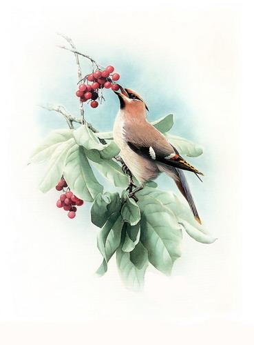 Красивые рисунки птиц фото 6