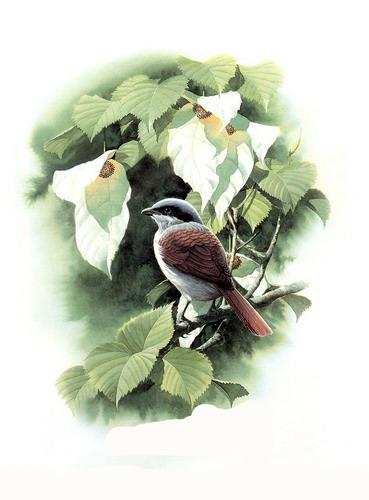 Красивые рисунки птиц фото 13