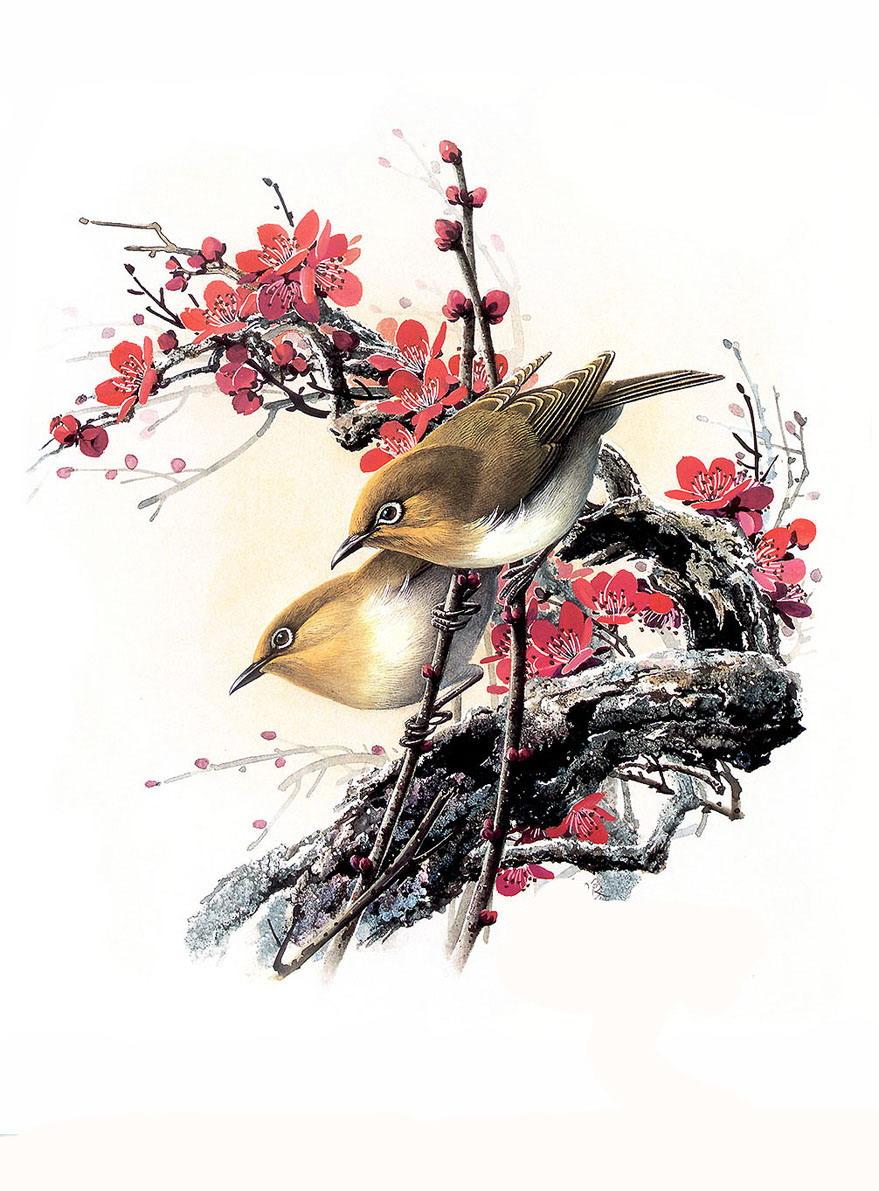 Красивые рисунки птиц фотография 1