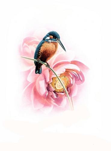 Красивые рисунки птиц фото 15