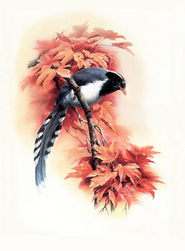 Красивые рисунки птиц фото 16