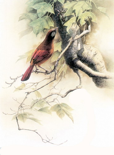 Красивые рисунки птиц фото 17