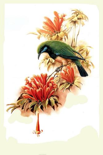 Красивые рисунки птиц фото 21