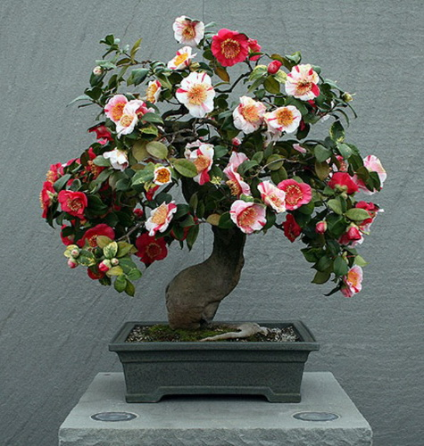 букетом цветов. можно без труда справиться и самому.  Но цветы быстро завянут, да и оригинальность в таком деле не...