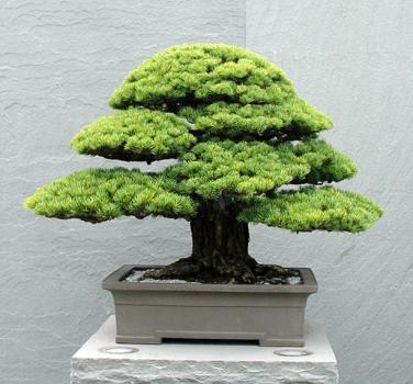 http://basik.ru/images/bonsai_museum/005.jpg
