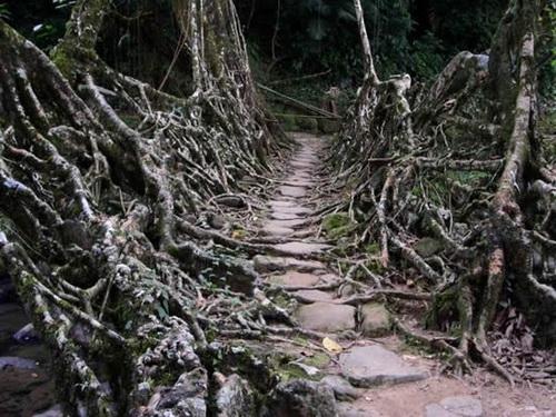 Очень заброшенный мост фото 0