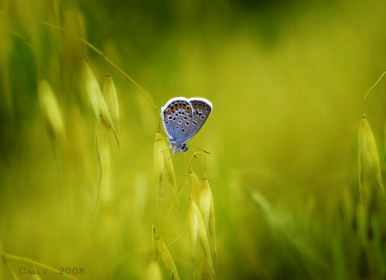 Basik ru макро фотография красивые макро