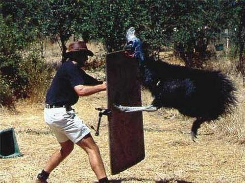 игры для страусов