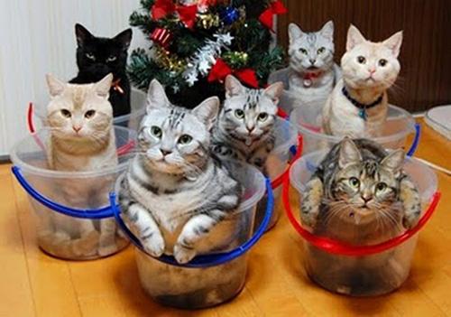 Способы хранения кошек фото 3