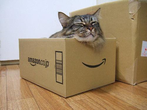 Способы хранения кошек фото 9