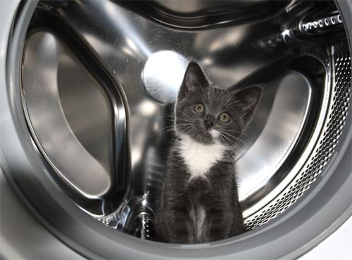 Способы хранения кошек фото 14